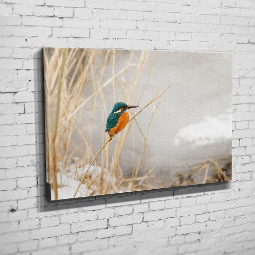 Ein Eisvogel an der Saale (BNR 304)